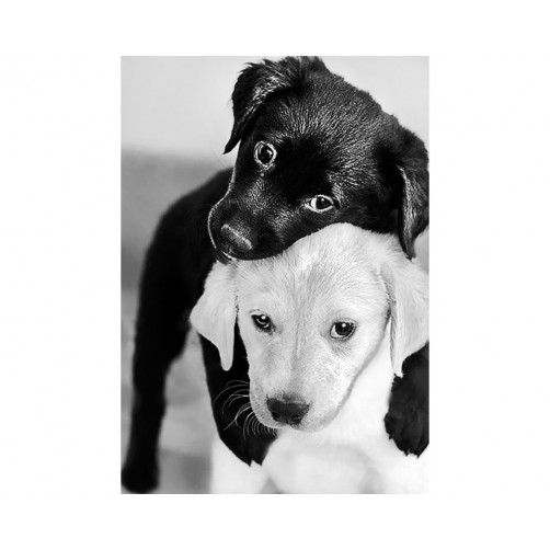 Collection D'Art Diamond Painting Cute Black and white puppies Misura 27x19 Cm