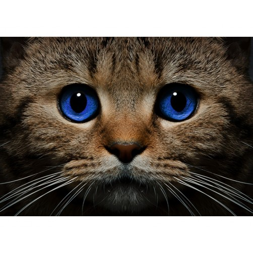 Collection D'Art Diamond Painting Cute Blue-eyed cat Misura 27x38 Cm
